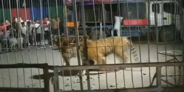Forrás: LiveLeak/ViralTab Video
