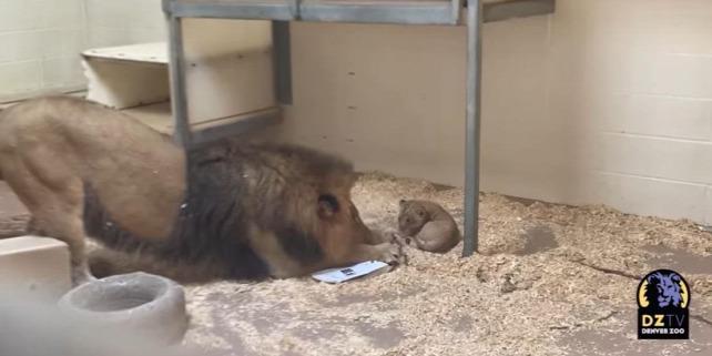 Forrás: Denver Zoo/Facebook