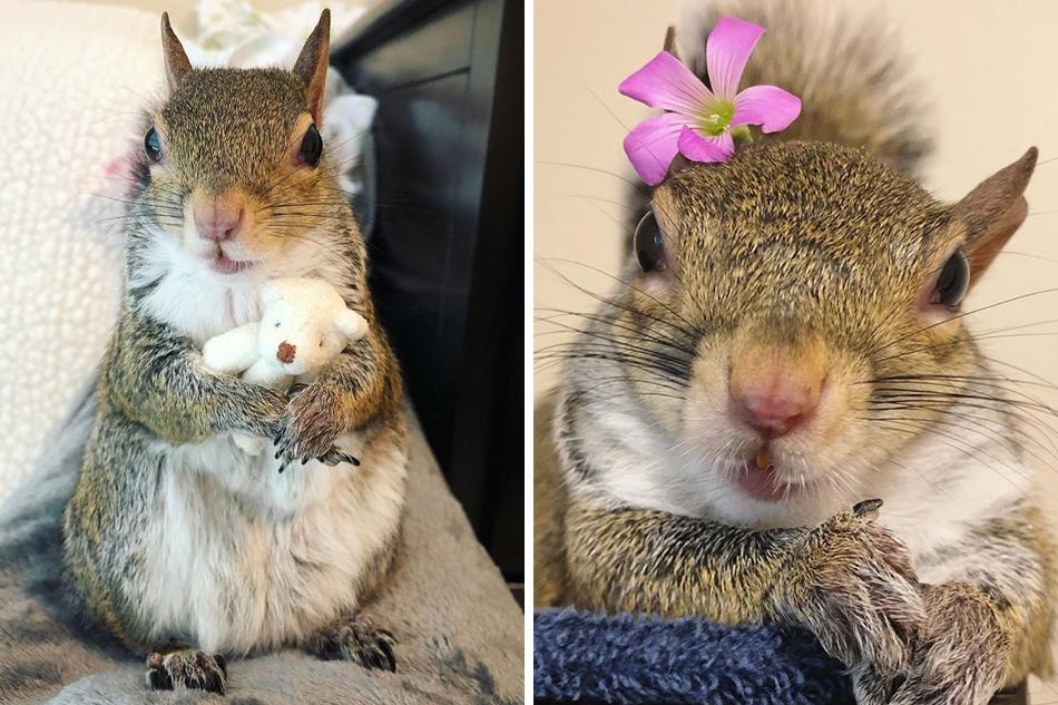 mókus randi hogyan lehet kiszámítani egy szikla életkorát radiometrikus randevú segítségével?