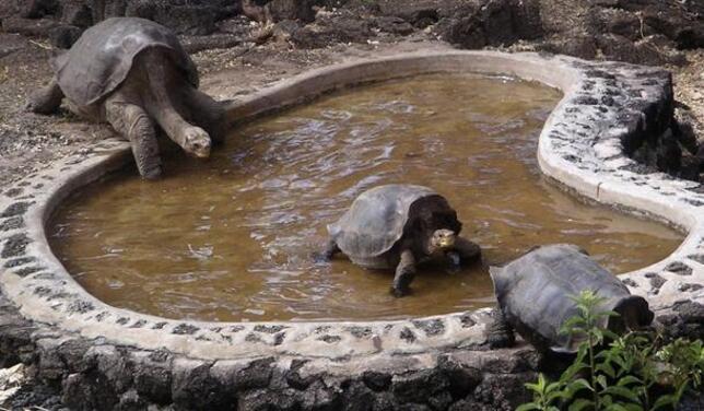 teknős randevú online társkereső oshawa