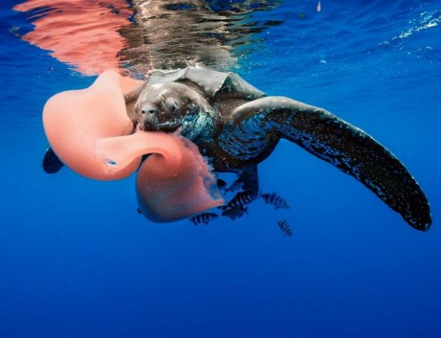 Drámai módon csökkent a kérgesteknősök száma Kalifornia partjainál