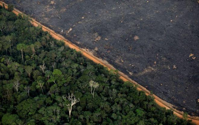 Súlyosbodott az erdőpusztítás az elmúlt hónapokban Brazíliában