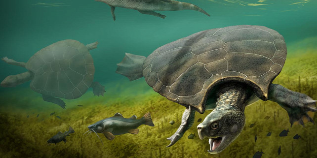 Forrás: https://www.sciencemag.org/news/2020/02/battle-scarred-fossils-suggest-giant-turtles-fought-each-other-and-crocodiles-three