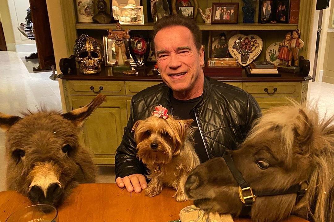Arnold Schwarzenegger is tévésorozatban folytatja