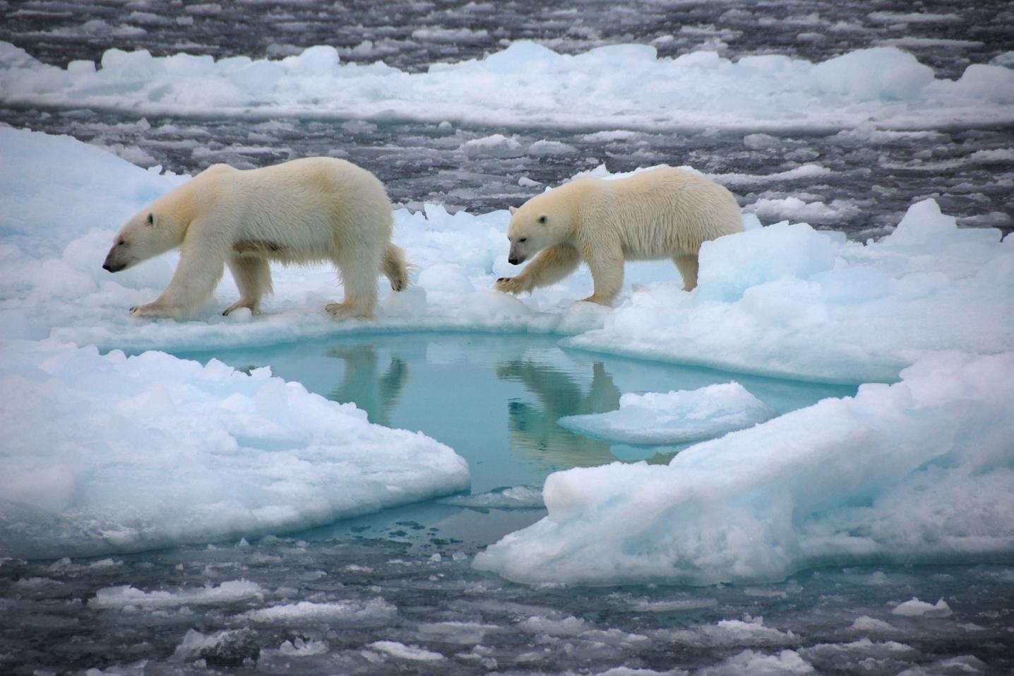 Kritikus a jégolvadás az orosz sarkköri vidéken