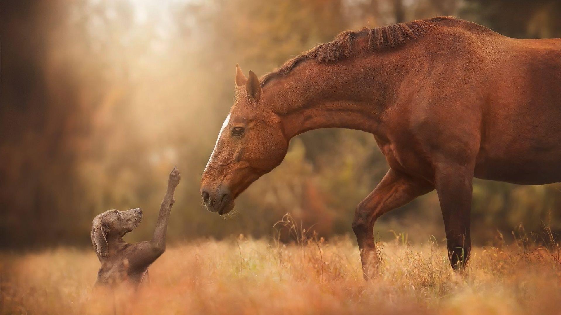 ember ismeri a ló)