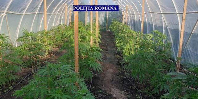 Forrás: Román Rendősrég