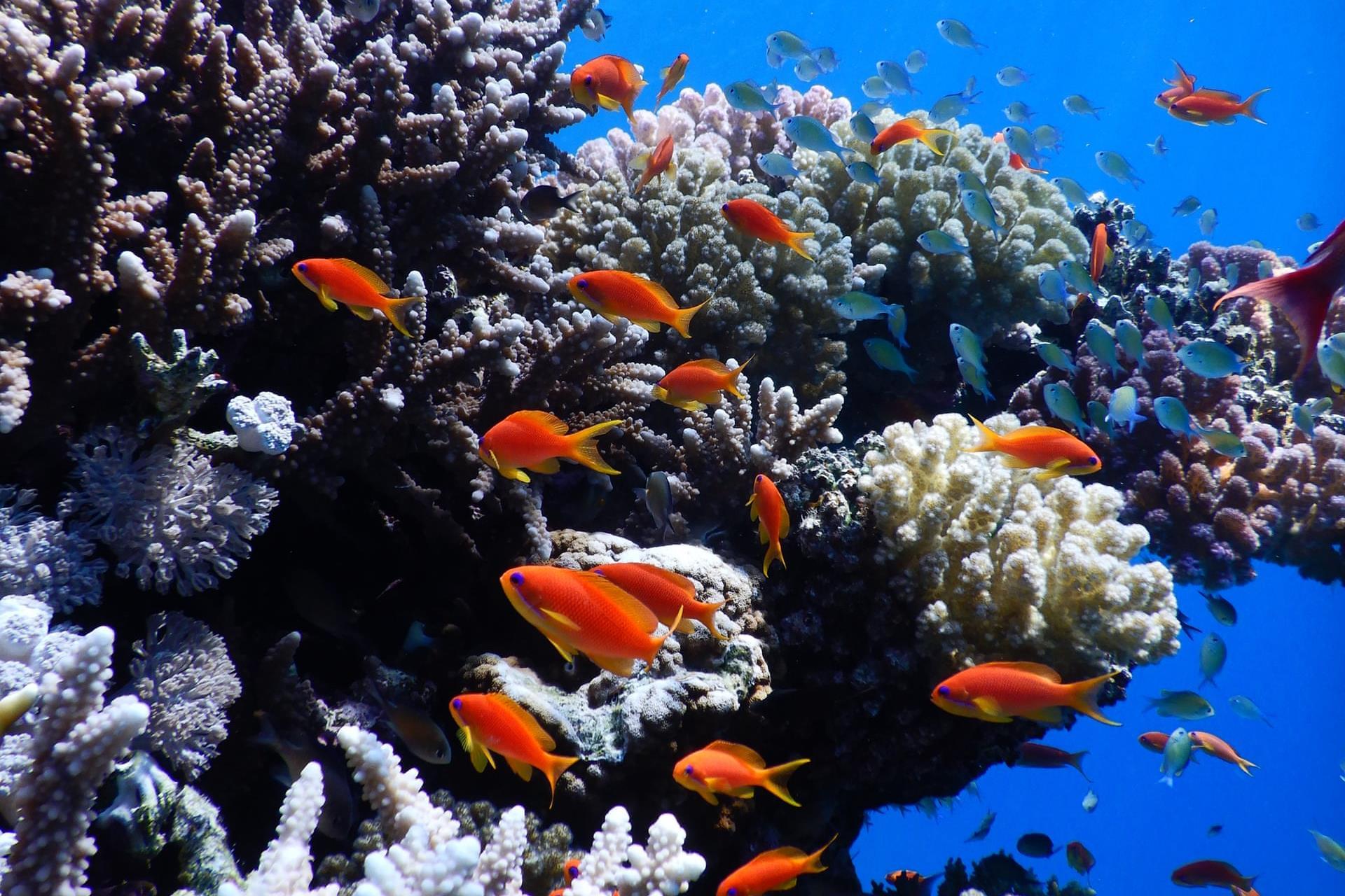 Óriásit változtak a korallzátonyok fél évszázad év alatt