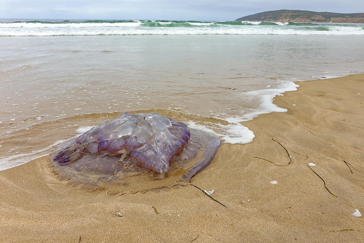 Döbbenet: elképesztő szörnyet fogtak ki a tengerből – Fotó