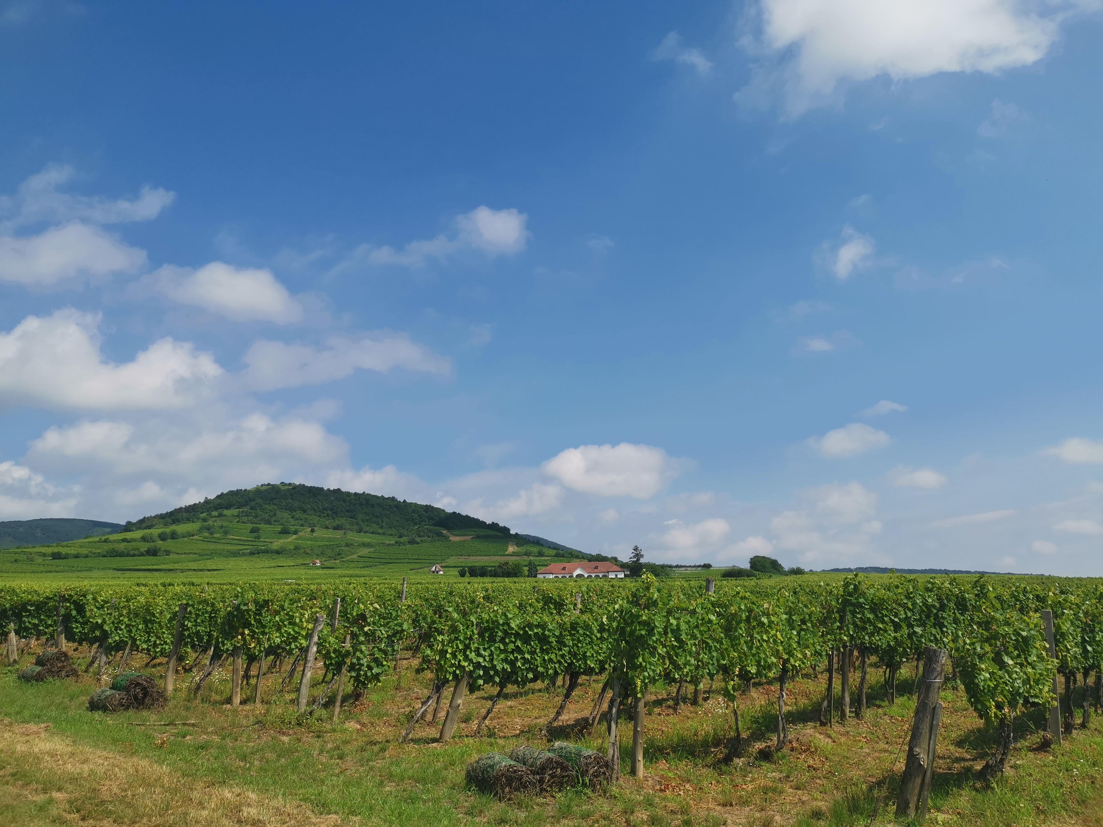 Tokaj-hegyalja: sokkal több egy gyönyörű borvidéknél