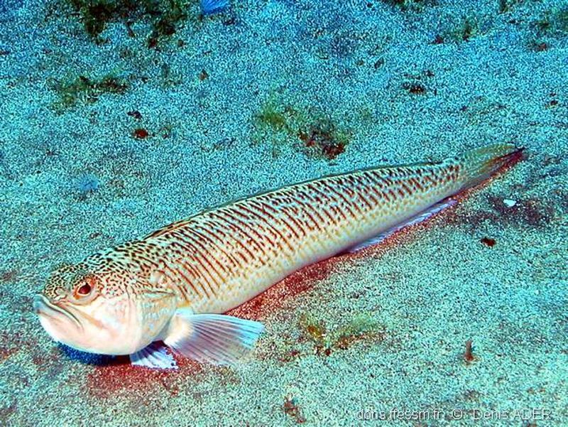 Apró, mérges hal miatt halt meg a spanyol tengerparton egy fiú