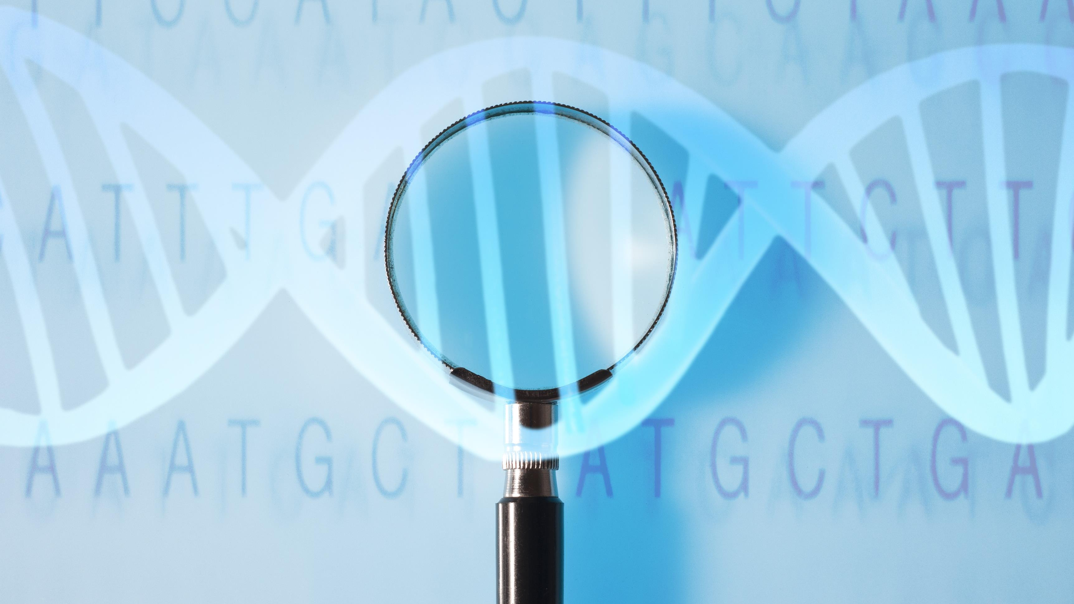 Találtak egy elhízást okozó génmutációt