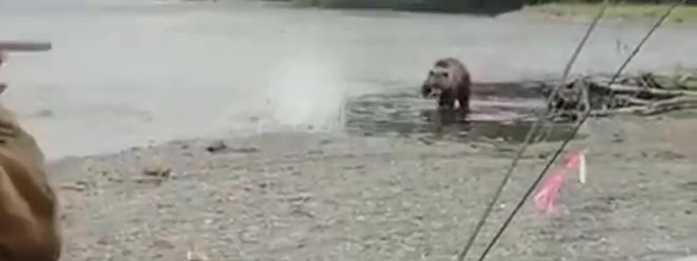 A medve nem játék, de egyszerűbb módon védekezhetünk ellene, mint gondolnánk