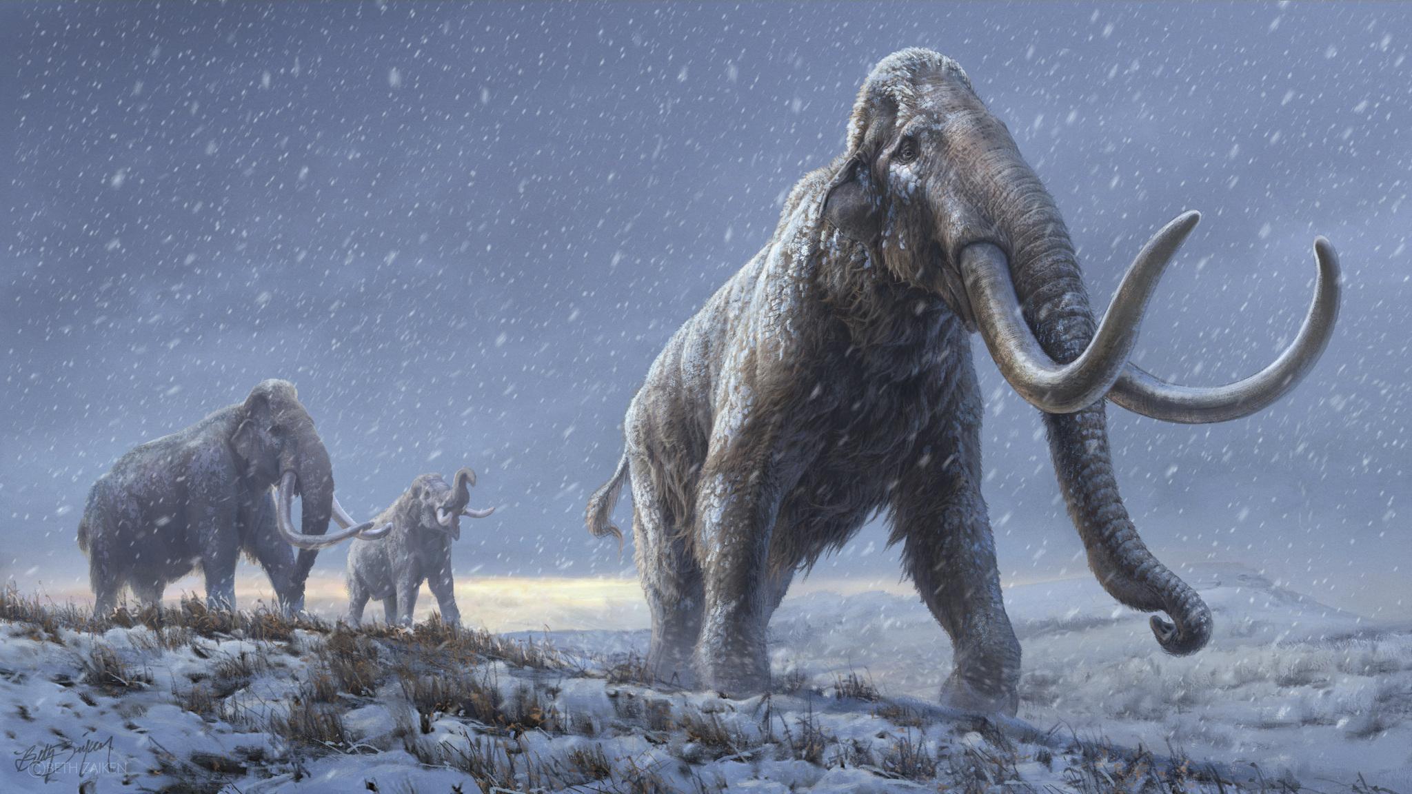 Feltámasztják a mamutokat