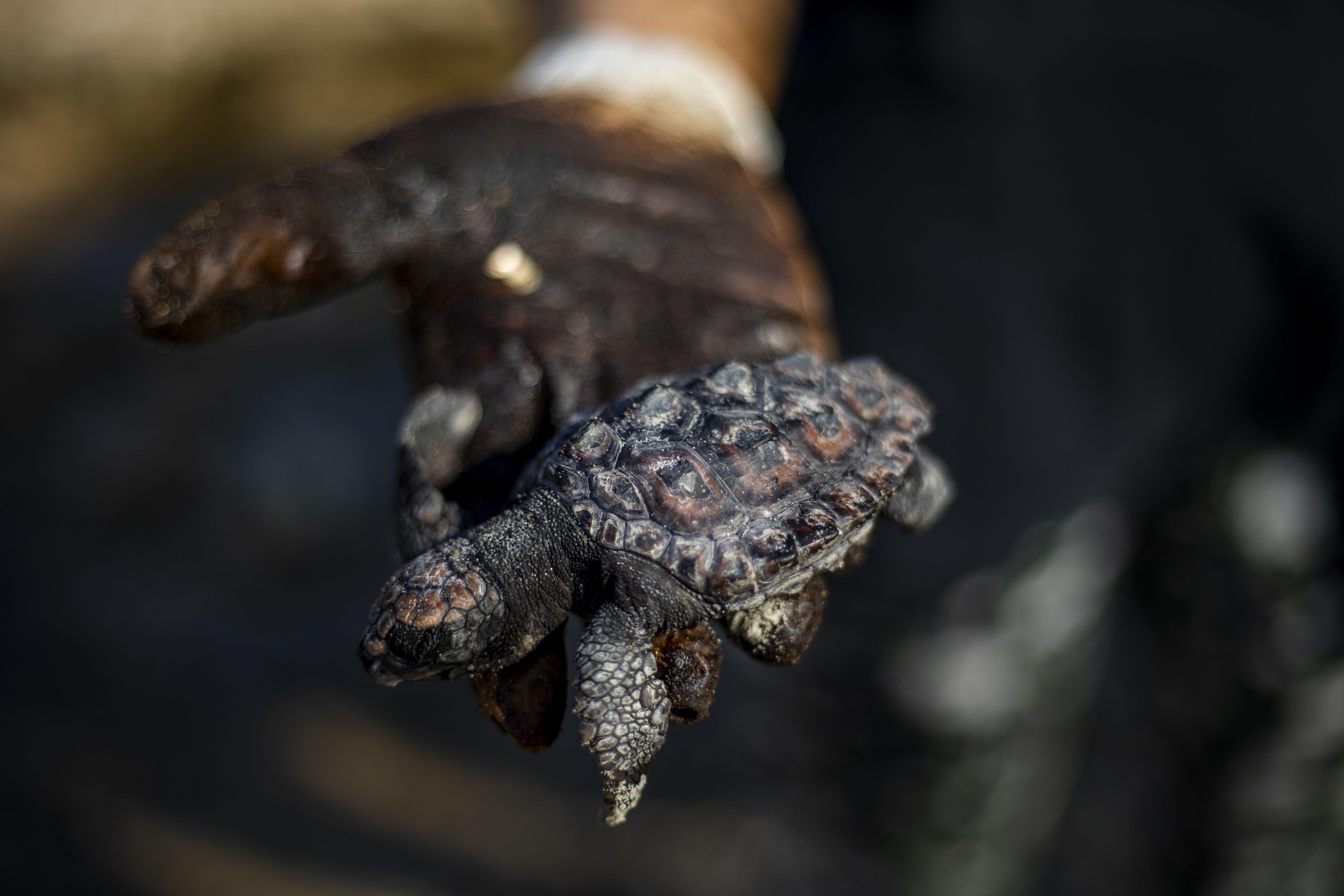 Megdöbbentő képeken az izraeli olajszennyezés
