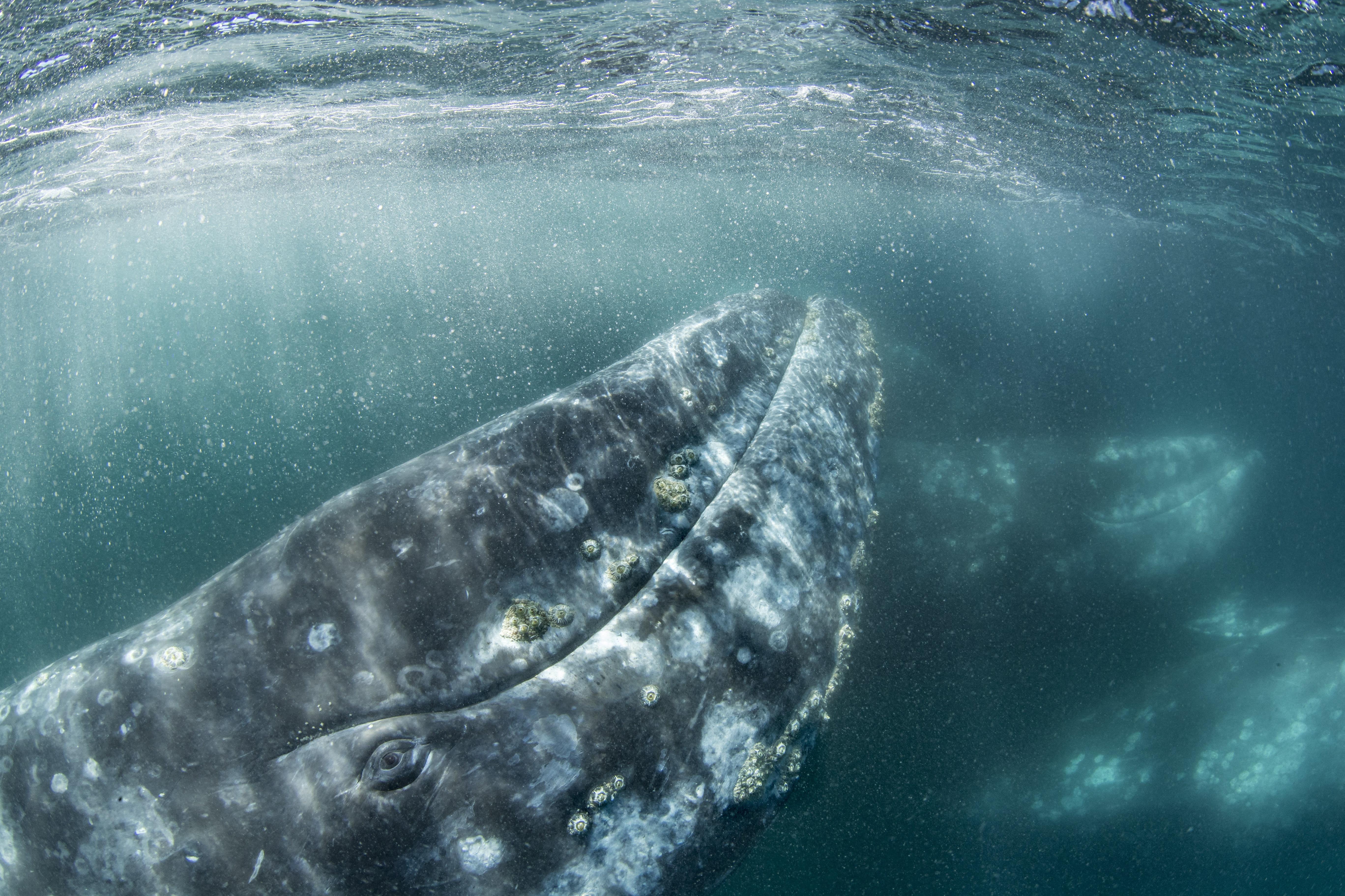 Csendesebbek a vizek, jobban hallják egymást a tengeri állatok