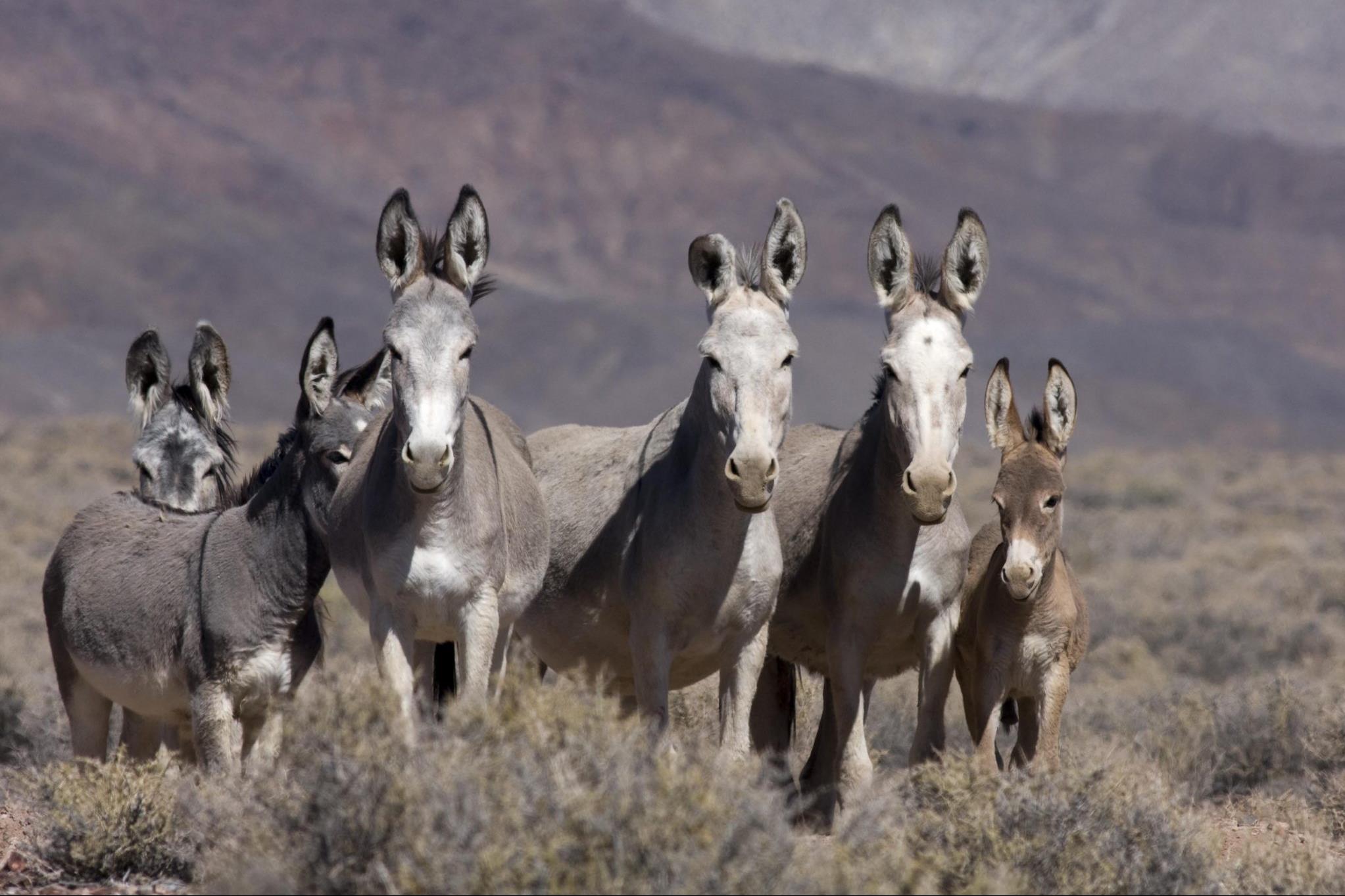 Így biztosítanak vizet a sivatag állatainak a vadszamarak