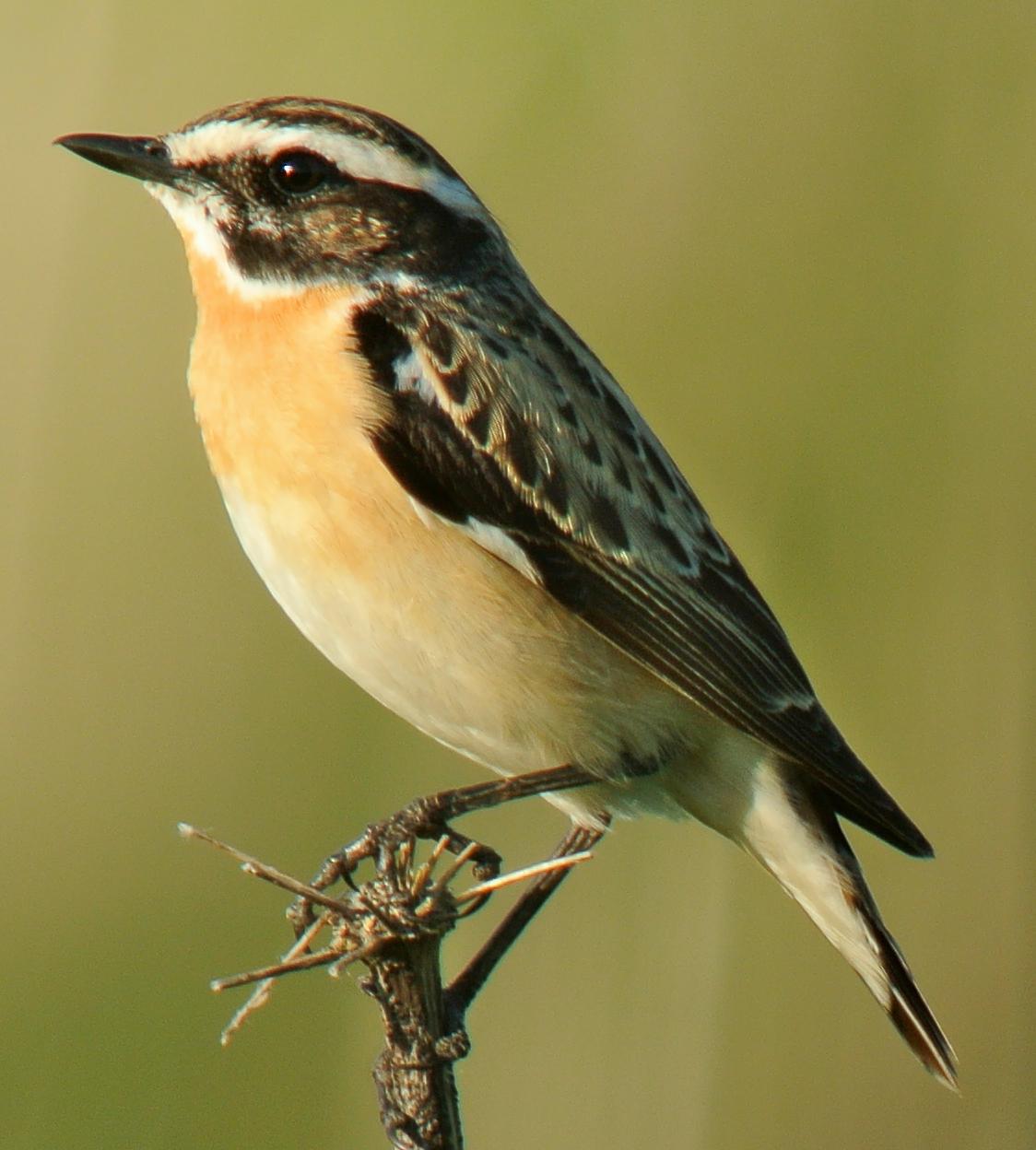 Sok szántóföldi és réti madár eltűnt az elmúlt két évtizedben