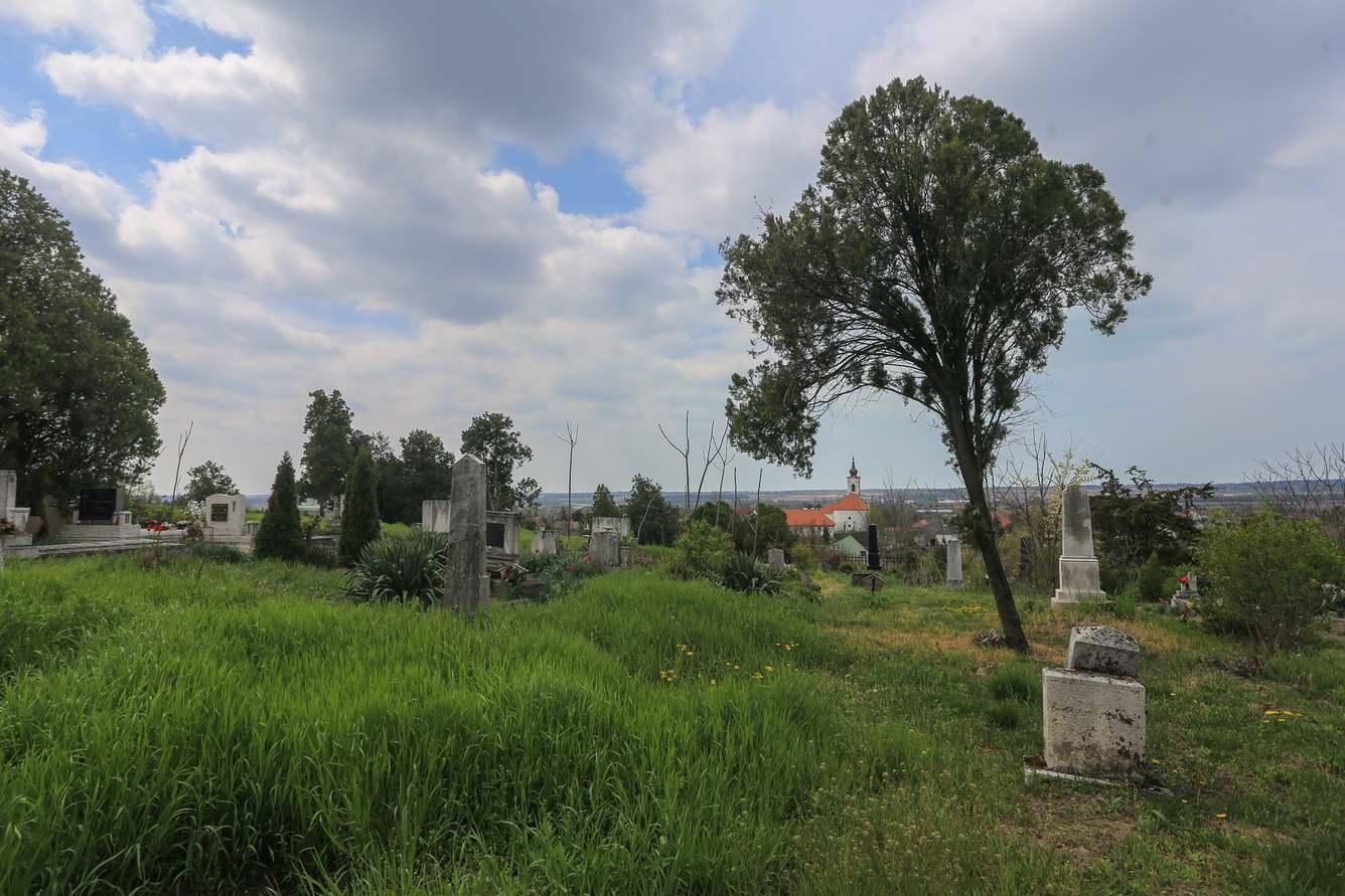 Természeti kincsek a balatonfőkajári temetőben