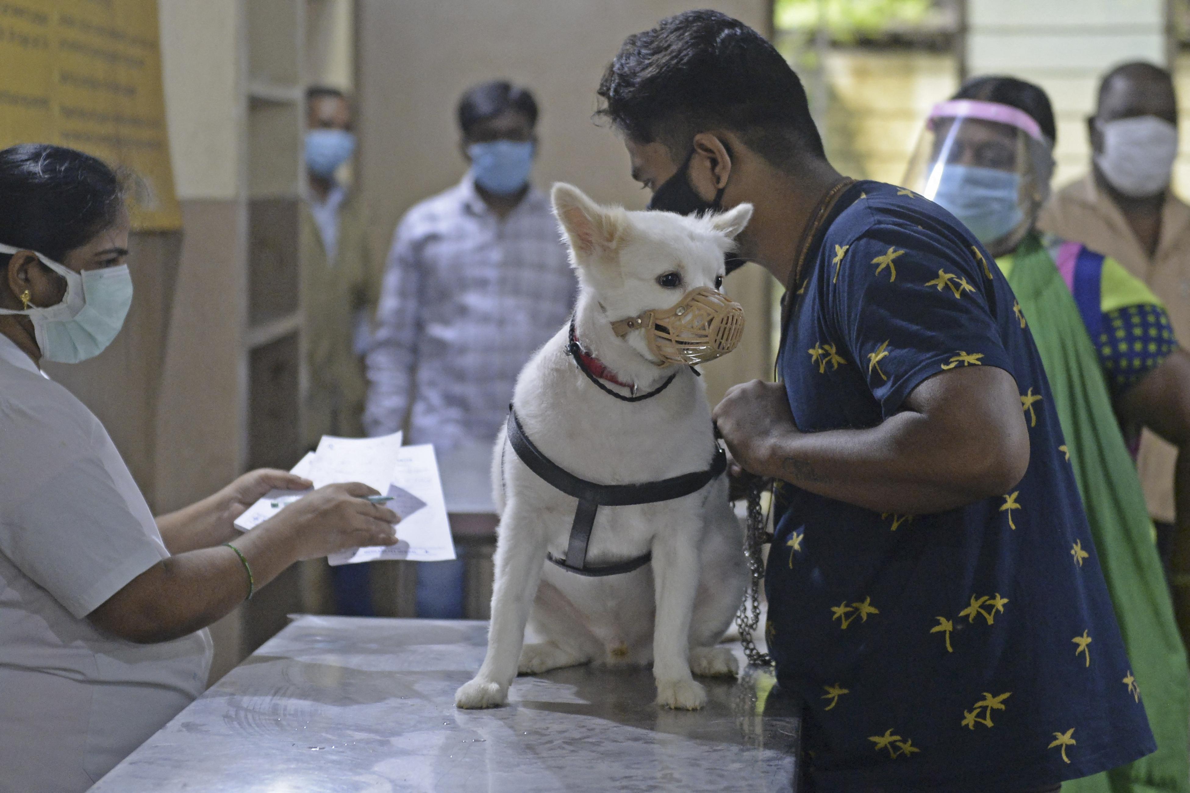Több millió haláleset okoznak a zoonózisok világszerte