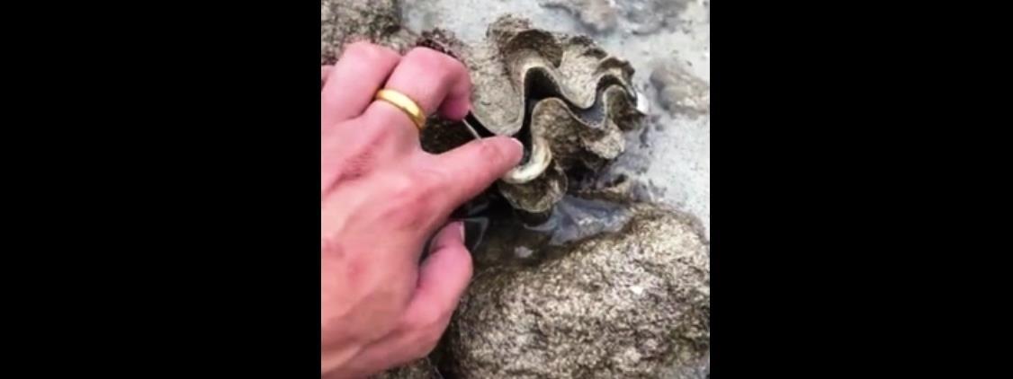 Meglepő dolgot tett a kagyló az őt piszkáló turistával – videó
