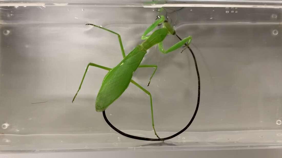 érdekes a paraziták életéből