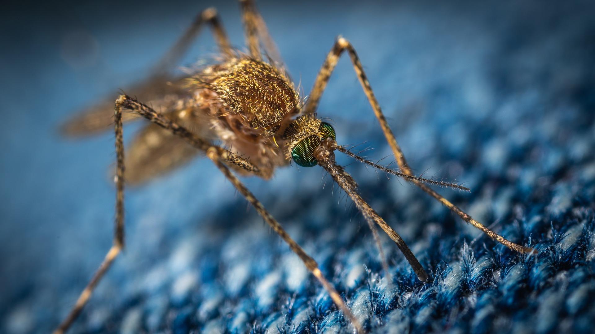 Vért utánozva pusztítanák el a maláriaszúnyogokat