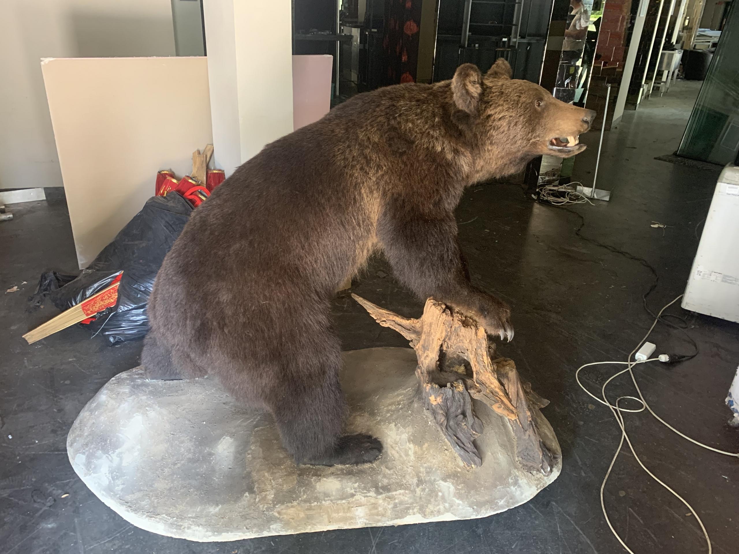 El akartak adni egy barna medvét az interneten