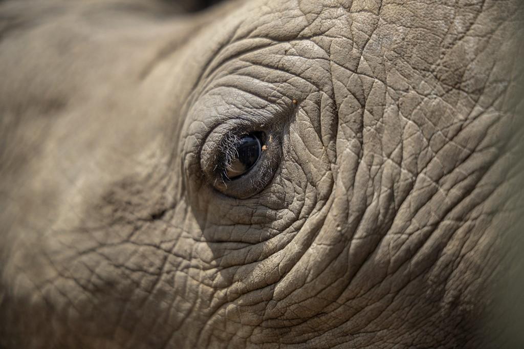 Aktivizálódtak a vadorzók Dél-Afrikában