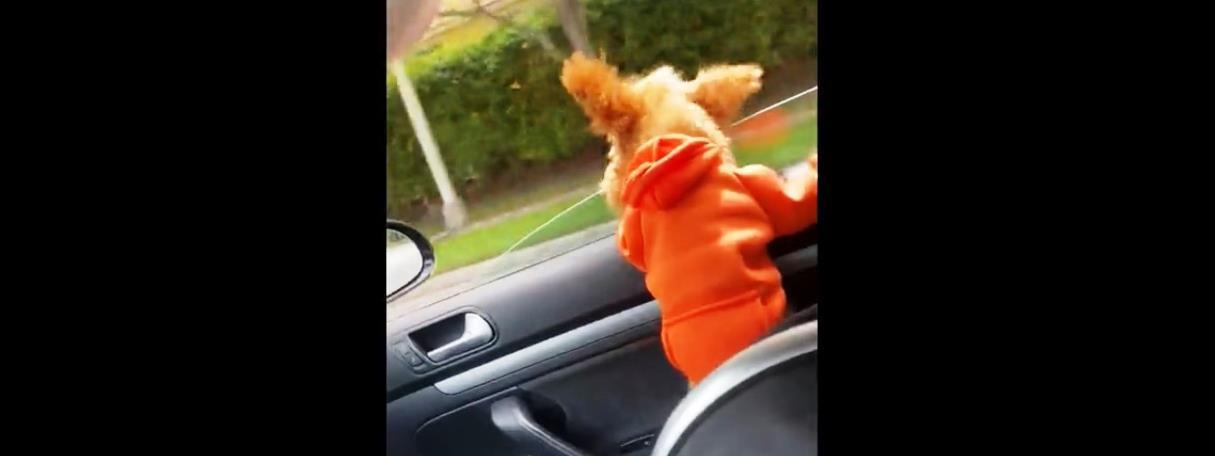 Kifújta a szél a kutyát az autóból – videó