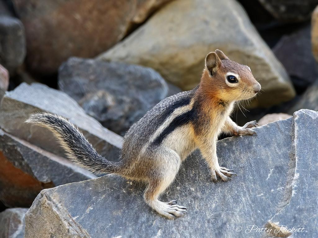 Ezért van szüksége a mókusoknak négy különleges személyiségjegyre