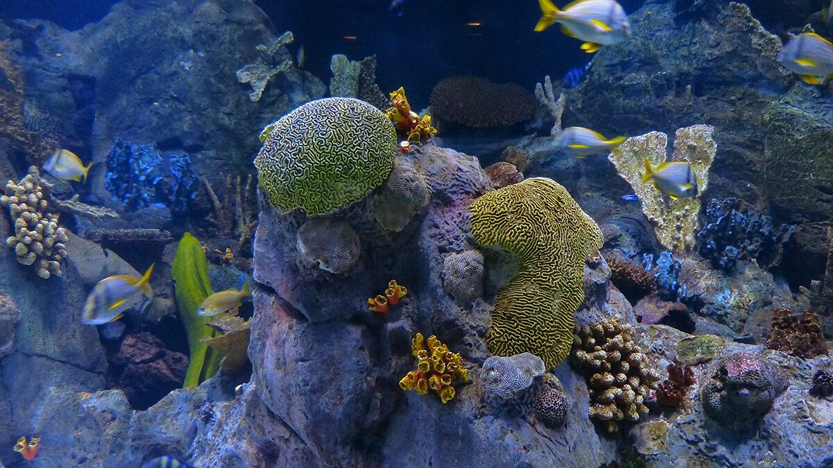 Hat új, bizarr mélytengeri szivacsfajt fedeztek fel