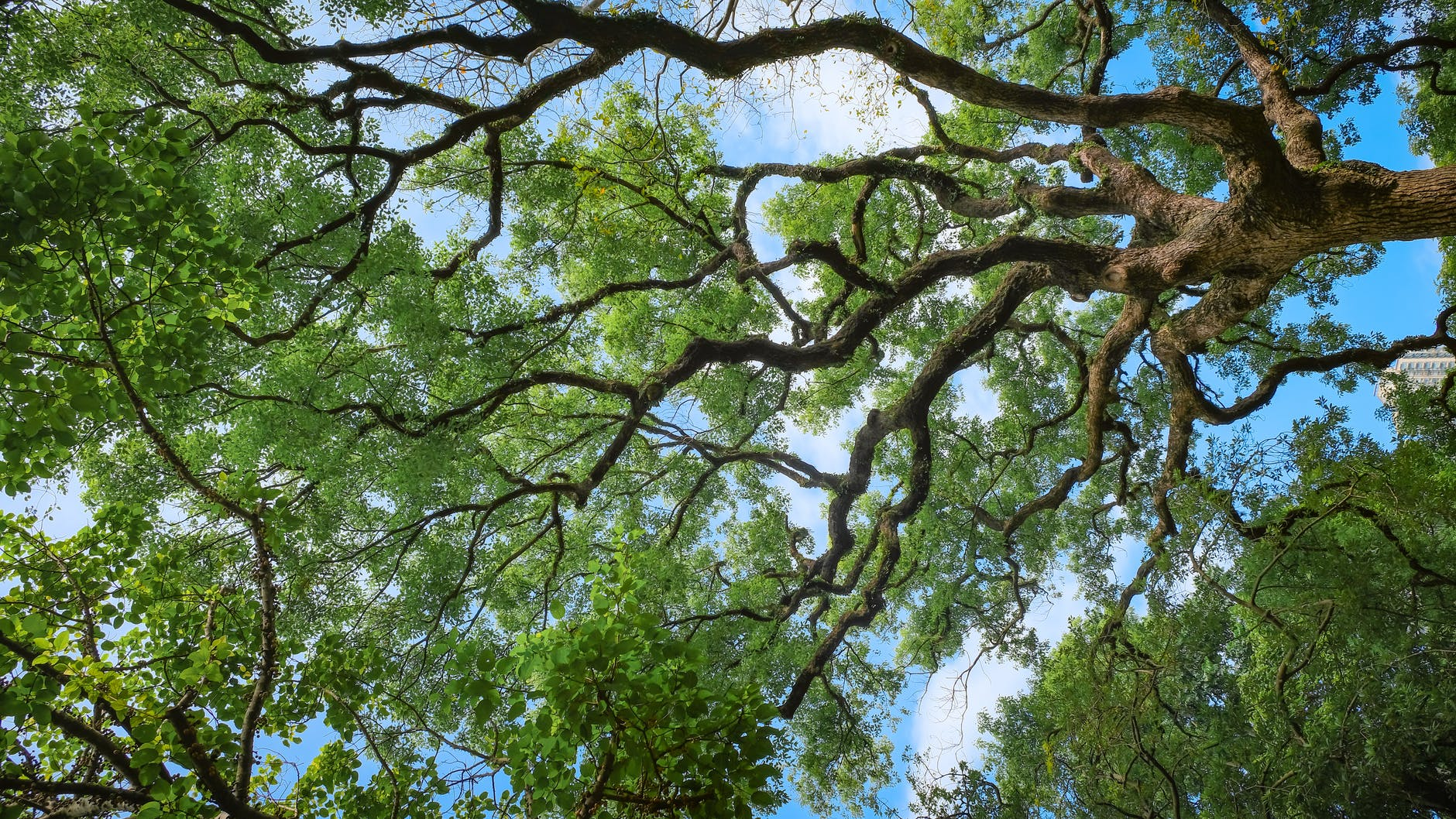 Ezek az erdei biodiverzitás kulcsfontosságú környezeti tényezői