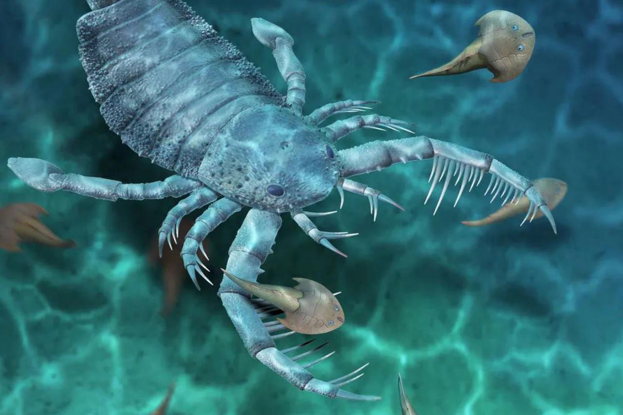 Kutyaméretű skorpiót találtak Kínában