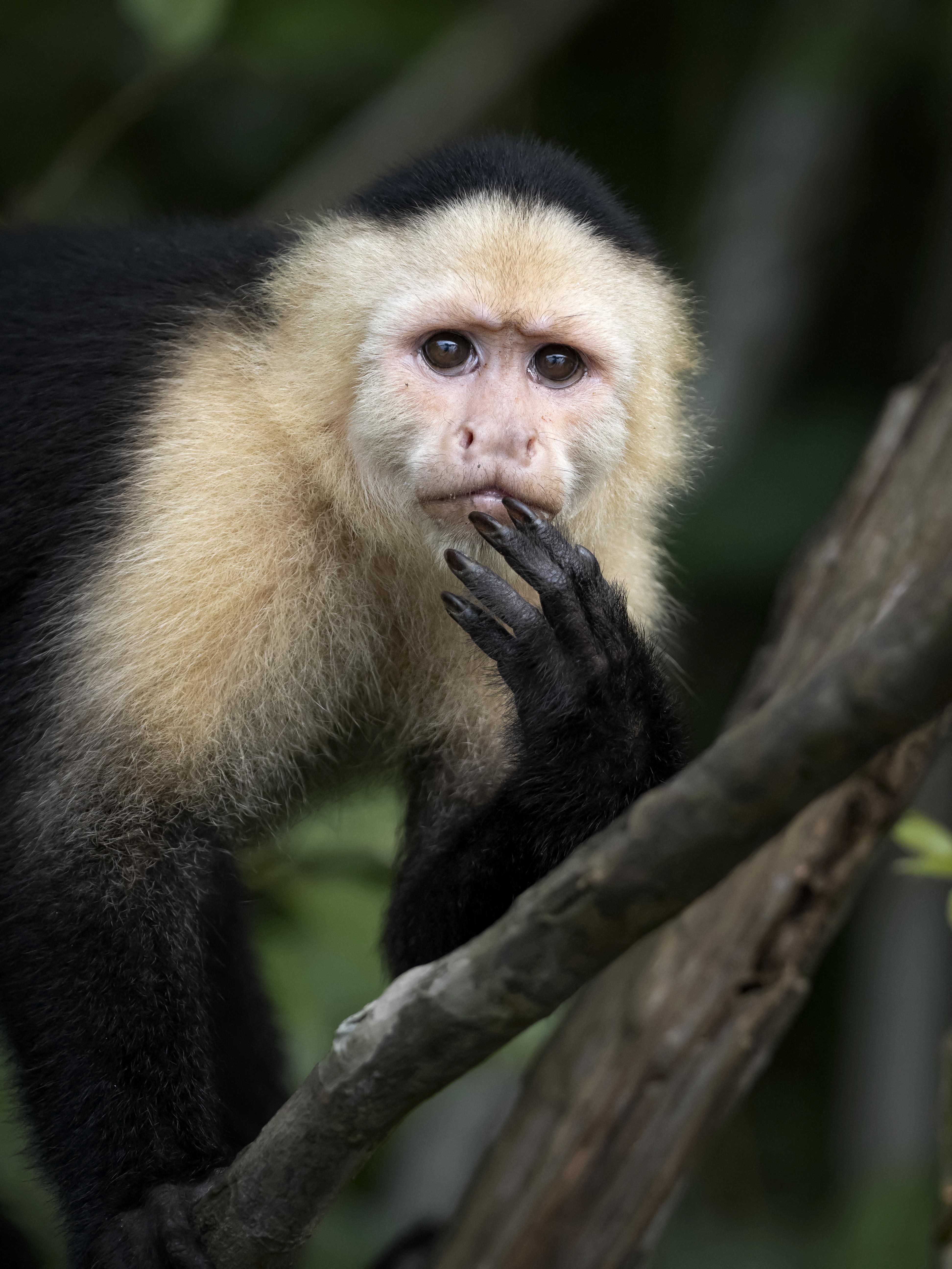 Sokkolta a kutatókat a kedves állatok kegyetlen viselkedése